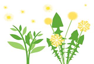 Allergies au pollen des mauvaises herbes